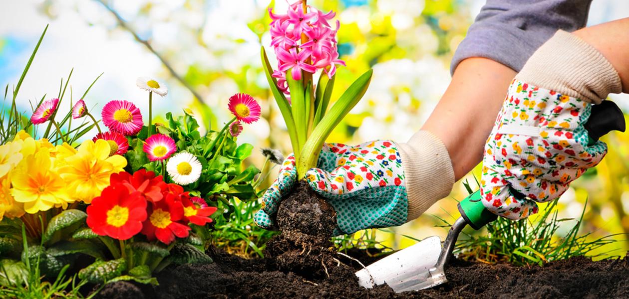 tips for the garden