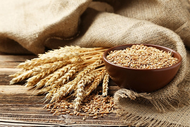 Properties and benefits of wheat