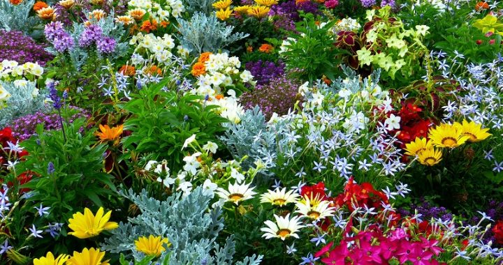 Create your own aromatic plant garden