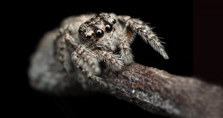 How long do spiders live